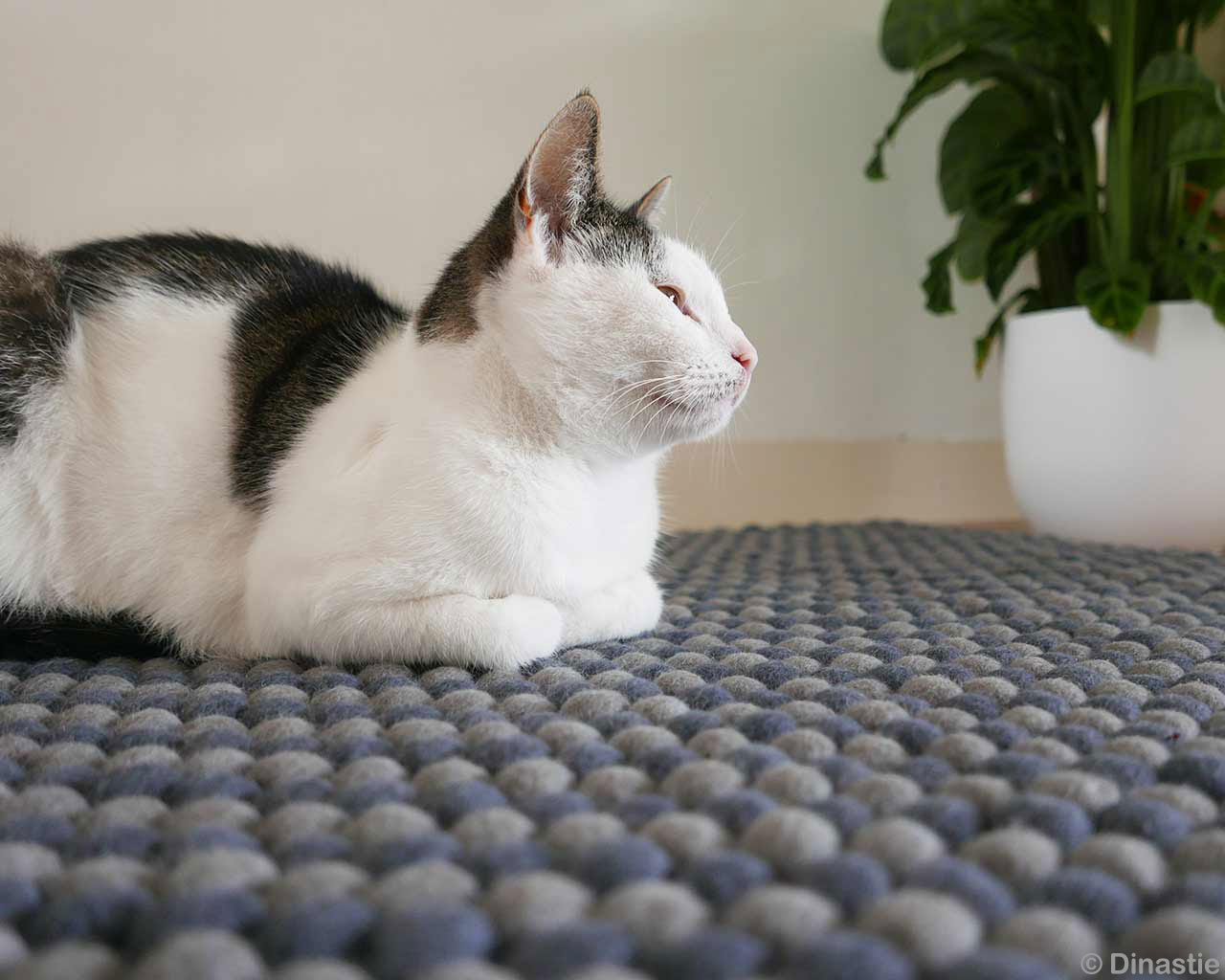 cat felt ball carpet comfortable