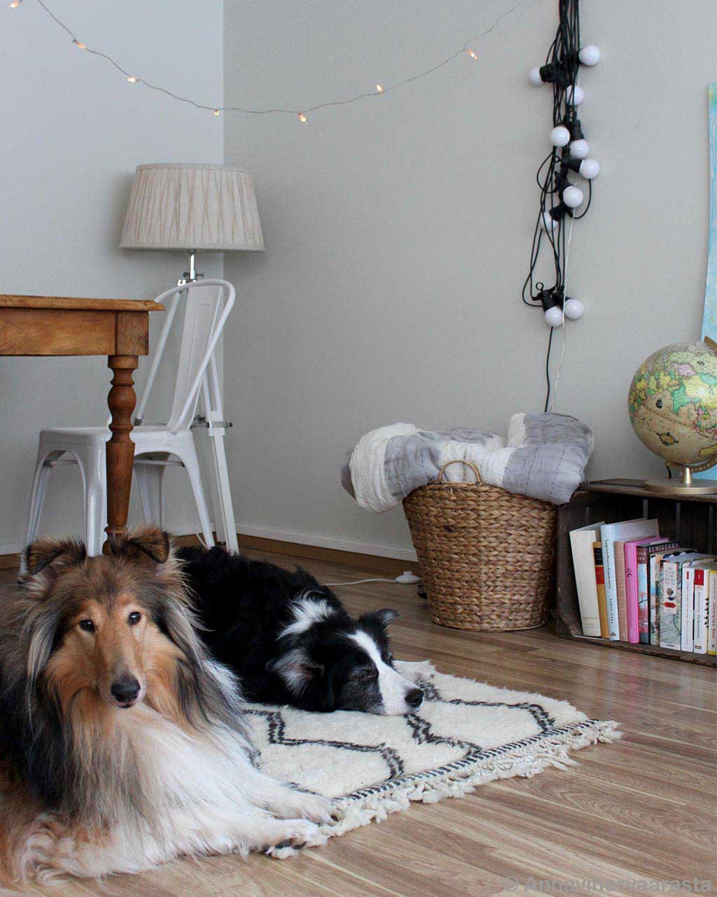 brown dog basket and lamp from morocco modern room rugs