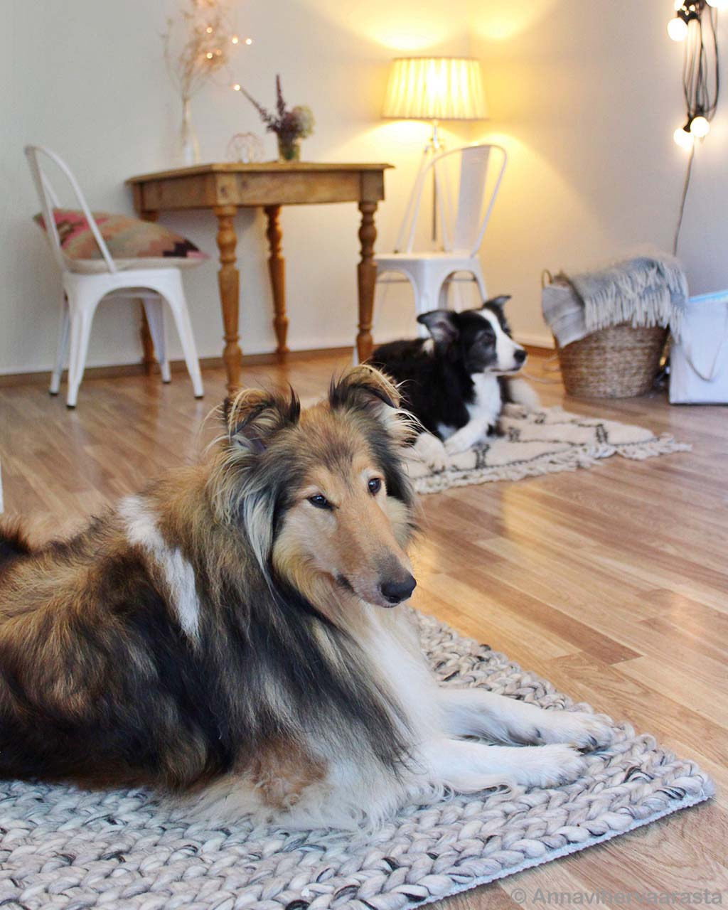 hand knotted dogs and wooden floor modern rug store